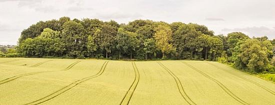 tescherbusch.jpg: 1024x390, 109k (25. August 2019)